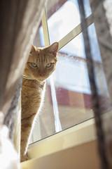 52 Weeks, Week 24 (clarissa___t) Tags: feline cat boy window naturallight pet sky peekaboo candid portrait animal animalportrait