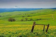 Columbia Hills 4400 A (jim.choate59) Tags: on1pics jchoate columbiahillsstatepark washingtonstate columbiarivergorge klickitatcounty springtime field flowers wildflowers balsamroot fence decay rural mountain mounthood hills scenic d610 hff