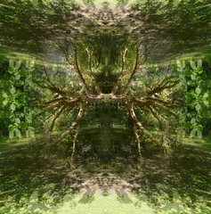 myself comprehending how to understand the butterfly (stan bonnar) Tags: butterflies underwater roots trees light shade