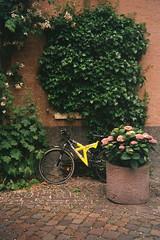 Grüne Absteige (alf sigaro) Tags: voigtländerbrillantafmini voigtländer af voigtländerbrillantaf brillantafmini badenwürttemberg ladenburg fahrrad
