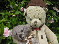 Paddington, Scout and the Camellia Bush (raaen99) Tags: pink palepink softpink camellia camelia camellias camelias dew wet flower flora bloom paddington paddingtonbear paddybear paddy teddy teddybear bear softtoy vintage vintageteddy vintageteddybear vintagetoy handmade softie plush cute cuddly soft scout scoutbear cuddle hug littlebearhug biglittlebearhug knitting knitted knittedtoy fairtrade fairtradebear scouthouse gardenofsterth sterth sterthgardens sterthhouseandgardens simmondsreef diggersclub diggers diggersgardeningclub diggersgardenclub gardeningclub gardenclub garden blackwood victoria australia grounds houseandgardens formalgarden game playing play leaf green tree autumn