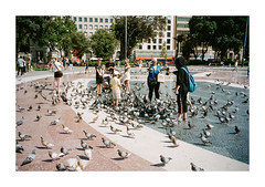 FILM - Pigeons (fishyfish_arcade) Tags: 35mm analogphotography barcelona canonsureshotz135 filmphotography filmisnotdead istillshootfilm kodak portra400 analogcamera compact film streetphotography pigeons plaza