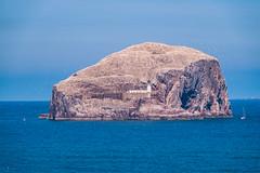 Bass Rock from Tantallon Castle (Bev & Paul Mynott) Tags: bassrock tantalloncastle firthofforth scotland seabirds gannets