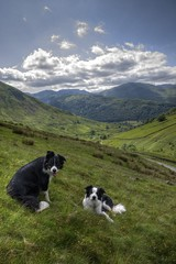 The Boys (vincocamm) Tags: cumbria valley hartsop landscape grass hills mountains dogs bordercollies sheepdogs sky clouds helvellyn brotherswater fells lakedistrict