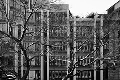 Reflecting on trees (OzzRod) Tags: sony a7rii sonyepz1650mmf3556oss street trees buildings windows reflections streetscape abstraction monochrome blackandwhite wellington newzealand