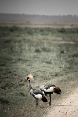 birds.jpg (eoin_feely) Tags: africa wild safari wildanimal nature birds animals africansafari animal