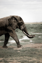 elephant-3.jpg (eoin_feely) Tags: africa wild safari wildanimal nature animals africansafari elephant animal
