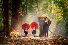 Community life. School children and elephants. Student little asian are raising elephants, Tha Tum District, Surin, Thailand. (pomp_jaideaw) Tags:
