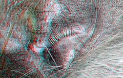 Macro 3D H-FT012 Lumix (wim hoppenbrouwers) Tags: anaglyph stereo redcyan macro 3d hft012 lumix pig varken oog eye
