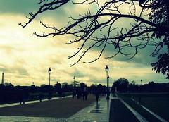 Paris (ForceMajeureMontenegro) Tags: paris france muséedulouvre louvre clouds tree city sky