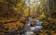 corney brook (primemundo) Tags: capebreton brook stream creek water corneybrook acadianforest forest meanderingbrook boxrivercanyon rivièreàlazare autumn whitewater bridge