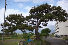 Matsuda#48 (tetsuo5) Tags: 足柄上郡 松田町 ashigarakamigun matsudamachi ef35mmf14l eos5dmarkⅱ explored