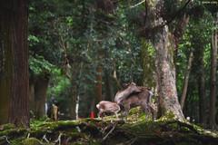奈良公園 ∣ Nara Park (Iyhon Chiu) Tags: 日本 奈良 nara japan japanese 奈良公園 鹿 deer park kasuga shrine 春日大社