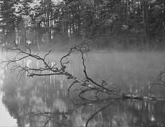 6Q3A3580 (www.ilkkajukarainen.fi) Tags: blackandwhite monochrome mustavalkoinen nature luonto lake järvi uusimaa suomi finland finlande eu europa scandinavia travel travelling visit happy life line threes puu puut three foto luva