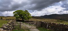 gate and tree (Phil-Gregory) Tags: ambleside2019 landscapes landscape lightroom lane light lakedistrict nikon naturalphotography naturephotography naturalworld nationalpark nice iamnikon d7200 scenicsnotjustlandscapes sigma18250macro sigma gate trees tree lonetree troutbeck tracks clouds cloudscape sky england
