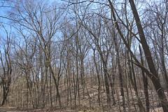 T'was Colder Then (Modkuse) Tags: winter wideangle nature natural rural outdoors art artphotography artistic artisticphotography woods trees clearandcold photoart kodakektachromee100g fujifilm fujifilmxt2 xt2 fujinon fujinonxf1855mmf284rlmois xf1855mmf284rlmois sunnyday sunnywinterday