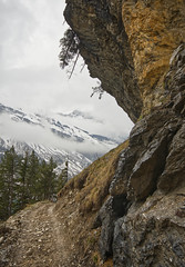 Dangerous Hiking (timopfahl) Tags: schweiz switzerland kandersteg oeschinensee hiking wandern wanderweg hikingtrail baum tree leaningtree mountains berge alpes alpen