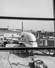 Airplane Qatar (tiagoalvar) Tags: destinations flight hotel lounge milesandpoints reviews travel doha catar