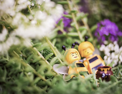 """""""Without the weekend, where would the week be?"""" ~ Anthony Hincks (Shelly Corbett Photography) Tags: lego macrophotography lensbaby bees garden toyphotography toys sleeping"""