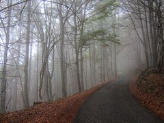 Ride a bike in the clouds - Part II (pascal445) Tags: road mountain alps alpes france mountains montagne route mist misty brouillard nuages clouds forest woods trees tree arbres brume feuilles leaf leaves outdoor landscape nature