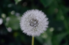 157 Wish (Conanetta) Tags: