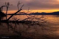 Coucher de soleil sur le Lac de Neuchâtel (Switzerland) (christian.rey) Tags: olympus digital camera tg4 lac neuchâtel font sunset coucher soleil grande cariçaie arbre jura plage fribourg broye