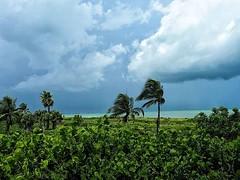 Approaching storm #nofilter #thunderstorm #sanibelisland #cloudscape #weather #nobeachtoday #tropicalplants (Sivyaleah (Elora)) Tags: sanibel island vacation june 2019 view lush palm trees green clouds blue olympus penf mirrorless