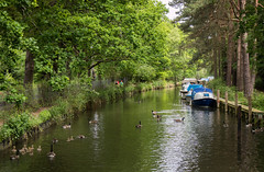 Family outing (fotosforfun2) Tags: surrey basingstokecanal canal water reflection waterway barge boat river green summer seasons birds bird duck swan trees foliage transport bark family beauty beautiful capture pic scene tourist tourism nationaltrust goose geese