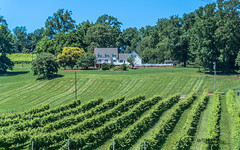 Virginia--Honah Lee Vineyard 2019 130 (White Shadow 56) Tags: green wine tasting weddings nikon d600 mountains grapes vineyard merlot family farm winding road trucks hay virginia gordonville hills cattle travel events music summer 2019 tamron af 28300mm f3563 di ii vc ld aspherical if