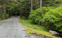 2019-06-27 phone Acadia Day 06 (2)-2 (Paul-W) Tags: barharbor maine unitedstatesofamerica acadia acadianationalpark nationalpark 2019 biking running eaglelake snappingturtle eggs nest