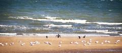 Seabirds (Gill Stafford) Tags: gillstafford gillys image photograph wales northwales conwy rhisonsea birds'cormorants gulls seagulls sea summer nature