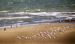 Sunbathing Seabirds (Gill Stafford) Tags: gillstafford gillys image photograph wales northwales conwy rhisonsea birds'cormorants gulls seagulls sea summer nature birds'cormorants