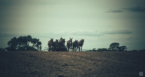 Pays Amish 3
