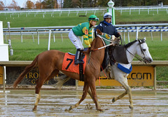 "2018-10-27 (63) r9 Kevin Gomez on #7 Towson (JLeeFleenor) Tags: photography md photos outside outdoors maryland jockey jinete equine jóquei dżokej marylandhorseracing marylandracing جُوكِي คนขี่ม้าแข่ง žokej jocheu ""赛马骑师"" ""競馬騎手"" horses caballo cheval cal cavallo cavalo pferd equestrian alogo hest thoroughbreds soos hevonen cuddy paard cavall kon jokey fantino ceffyl faras hestur perd người konj capall beygir yarraman rennreiter жокей kilparatsastaja ""경마 기수"" uma kuda koin 馬 häst лошадь 马 koń סוס حصان кон άλογο घोड़ा pfeerd"