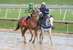 "2018-10-27 (62) r9 Kevin Gomez on #7 Towson (JLeeFleenor) Tags: photos photography md marylandracing maryland marylandhorseracing equine outside outdoors jockey جُوكِي ""赛马骑师"" jinete ""競馬騎手"" dżokej jocheu คนขี่ม้าแข่ง jóquei žokej kilparatsastaja rennreiter fantino ""경마 기수"" жокей jokey người horses thoroughbreds equestrian cheval cavalo cavallo cavall caballo pferd paard perd hevonen hest hestur cal kon konj beygir capall ceffyl cuddy yarraman faras alogo soos kuda uma pfeerd koin حصان кон 马 häst άλογο סוס घोड़ा 馬 koń лошадь"