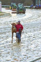 2018-10-27 (75) r9 #7 Towson (JLeeFleenor) Tags: photos photography md marylandracing maryland marylandhorseracing equine outside outdoors horses thoroughbreds equestrian cheval cavalo cavallo cavall caballo pferd paard perd hevonen hest hestur cal kon konj beygir capall ceffyl cuddy yarraman faras alogo soos kuda uma pfeerd koin حصان кон 马 häst άλογο סוס घोड़ा 馬 koń лошадь