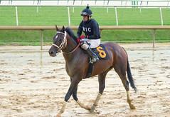 "2018-10-27 (21) r7 Oscar Flores on #6 Don On the Move for the win (JLeeFleenor) Tags: photos photography md marylandracing maryland marylandhorseracing equine outside outdoors jockey جُوكِي ""赛马骑师"" jinete ""競馬騎手"" dżokej jocheu คนขี่ม้าแข่ง jóquei žokej kilparatsastaja rennreiter fantino ""경마 기수"" жокей jokey người horses thoroughbreds equestrian cheval cavalo cavallo cavall caballo pferd paard perd hevonen hest hestur cal kon konj beygir capall ceffyl cuddy yarraman faras alogo soos kuda uma pfeerd koin حصان кон 马 häst άλογο סוס घोड़ा 馬 koń лошадь"