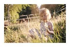 Petite Sarah (Pierre_Bn) Tags: sigma sigmaprophoto sigmasdquattro affinityphoto 1835 sigma1835 summer été champ champs chaleur coucherdesoleil couchédesoleil couchant enfant child alsace alsacedunord alsacienne