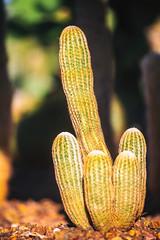 And So a Secret Kiss (Thomas Hawk) Tags: america arizona desertbotanicalgarden papagopark usa unitedstates unitedstatesofamerica cacti cactus desert phoenix fav10