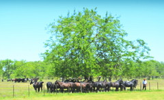 En el campo (Eduardo Amorim) Tags: horses horse caballo cheval caballos cavalos pferde cavalli gauchos chevaux gaucho campero gaúchos camperos campeiros campeiro argentina criollo herd cavallo pferd pampa provinciadebuenosaires sanantoniodeareco areco gregge crioulo troupeau caballoscriollos herde criollos tropillas pampaargentina tropilhas tropilla crioulos cavalocrioulo tropilha caballocriollo eduardoamorim cavaloscrioulos iayayam yamaiay pampaargentino