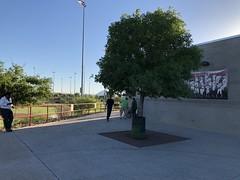 Tucson 1 (MFHarris) Tags: tucson saguaros cherryfield pecosleague arizona ballpark baseball stadium