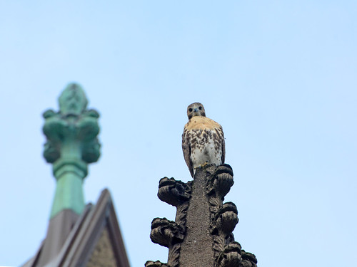 Fledgling on a Spire - 3894