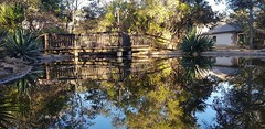 Reflections (Rckr88) Tags: waterberggamepark limpopo southafrica waterberg game park south africa