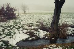 Memories of cooler Days (Netsrak) Tags: schnee mist snow tree nature fog forest landscape europa europe nebel path natur eu himmel eifel landschaft wald bäume baum rheinland rhineland weg pfad forst trees winter germany woods rheinbach