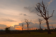 Depth (unsharptooth) Tags: sunset trees siemreap cambodia goldenhour landscape landscapephotography ngc nikon d610 happyplanet asiafavorites