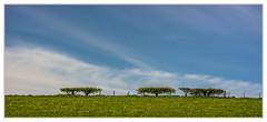 Schottenzaun (Werner Ba) Tags: schottland zaun hecke wolken clouds sky himmel landschaft natur naturschutz wiesen äcker agryllandbute