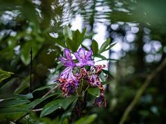 Dryed Flowers (walden.gothere) Tags: f18 forest flower forêt france frenchphotographer nikon nikond80 nikkor nikkor35mm nature colors lightroom life bokeh 35mm 35mmf18 35 reflex d80 dead dslr dx old