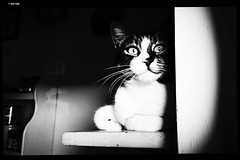 IMG_20190622_182944 (anto-logic) Tags: gatto occhi animali amicianimali amici cuccioli belli bellissimi amore dolci primopiano dof profonditàdicampo bw bn biancoenero blackandwhite felini libero libertà ritratto stupendo gorgeous nice pets pretty cute lovely cat eyes animals animalfriends friends puppies beautiful love sweet foreground depthoffield feline free freedom portrait carezza mano hand caress naturallight skin lighting crop charming puntodivista pov bokeh focus pointofview postproduzione postproduction lightroom filtro filter effetti effects photoshop alienskin leica huawei p20pro