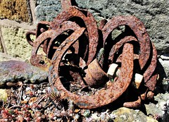 "Rusty Beauty.   Smile on Saturday.  A lucky find! (Martellotower) Tags: smileonsaturday horseshoes rustybeauty ""rusty beauty"""