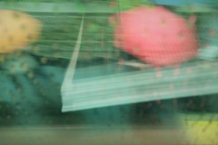 Ladybug (michael.veltman) Tags: watercolor train umbrella rain book edge bokeh